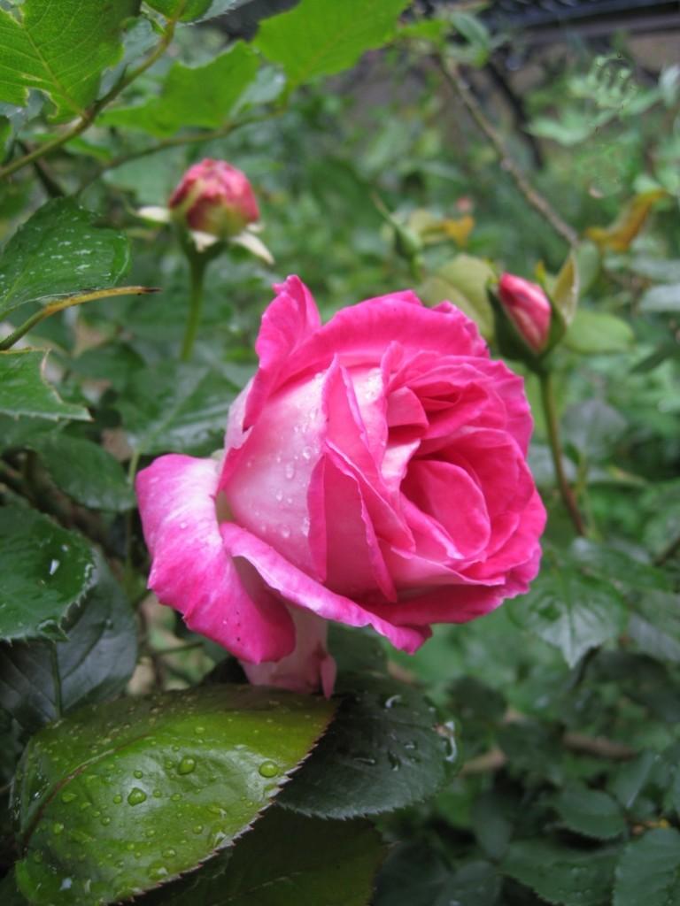 Floribunde