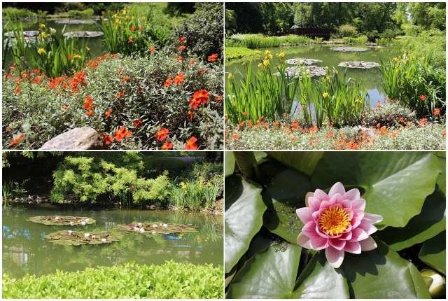 Profokus Botanički vrt