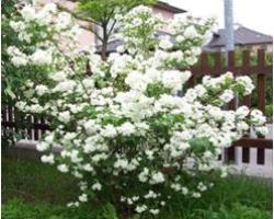 Dobitnik natjecaja vrta 2017 - Plan sadnje